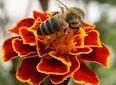 Arılardan Gerçek Bir Azim ve Başarı Öyküsü1